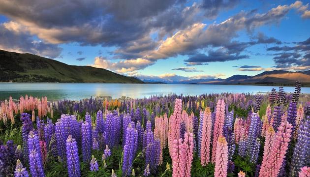 NEW ZEALAND EXPERIENCE Mondo