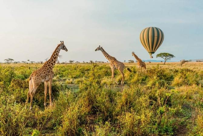 Tanzania - Safari Dream Mondo