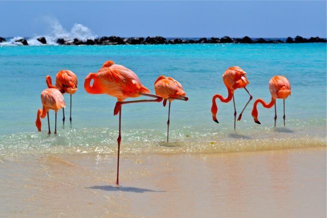 Capodanno ad Aruba - Bucuti & Tara Beach Resorts Mondo
