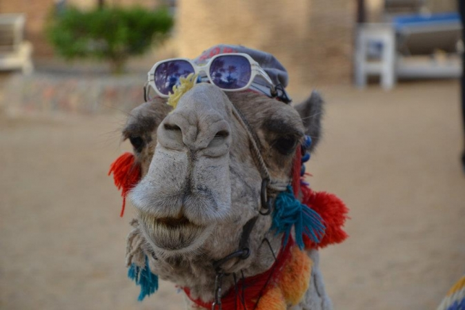 Estate a Sharm el Sheikh