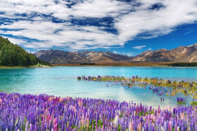 Nuova Zelanda  Mondo