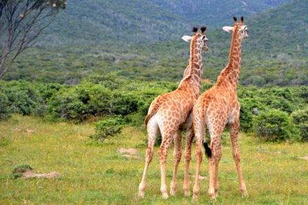 SUDAFRICA EXPERIENCE Mondo
