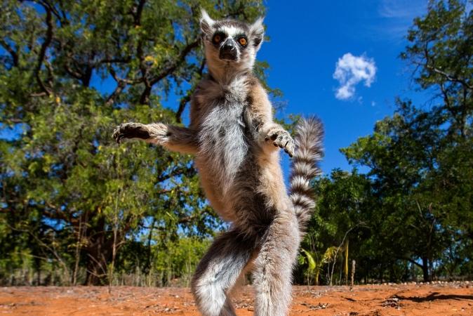 MADAGASCAR FASCINO COLONIALE Mondo